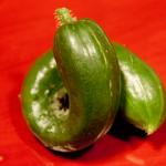 cucumber-seedling_2016spring_st04