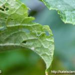 cucumber-seedling_2016spring_st07