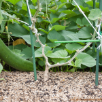 cucumber-seedling_2016spring_st11
