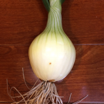 onion-early_2015autumn_st12