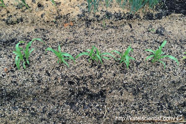 seedling_hcm_2016spring_st01