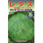 eye_v-lettuce_2016summer