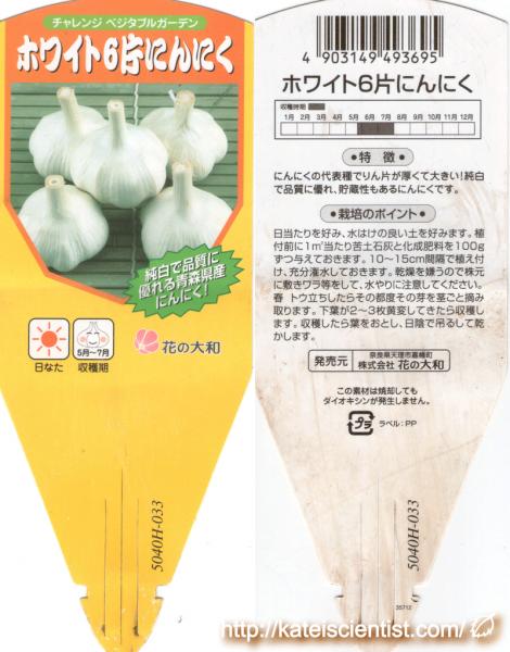 garlic-unknown_2015autumn_st01