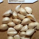 garlic_yamada-2016summer_st06