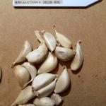 garlic_yamada-2016summer_st07