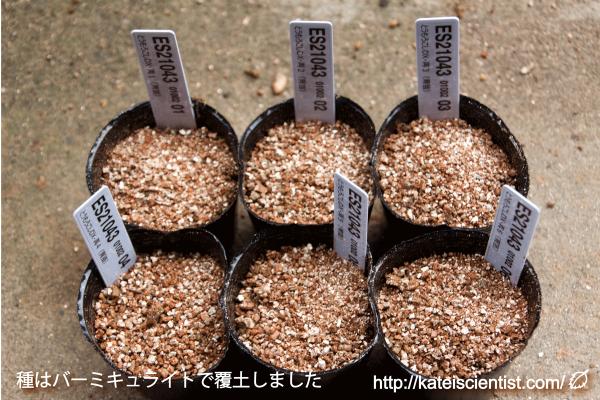 seed_bantamdx_2016summer2_st02
